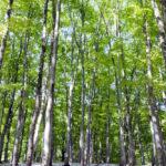 【八丁の湯オリジナル企画】奥鬼怒「ブナ平」自然観察トレッキング(4月30日~5月6日)